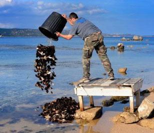 مقاله ترجمه شده روشهای پاکسازی آلودگی آب