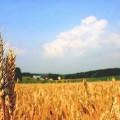 تحقیق بررسی تاثیر آفات گیاهان مرتعی بر صادرات