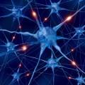 مقاله ترجمه شده اثر یادگیری بر توپولوژی شبکه عصبی