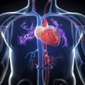 پاورپوینت آناتومی قلب-سلامتی