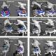 تحقیق مقاومت سیسپلاتین سلول های سرطانی