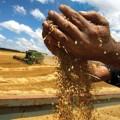 مقاله ترجمه شده نقش تجارت در امنیت غذایی جهانی پایدار