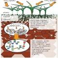 سیستمهای بیوژئوشیمیایی طبیعی برای راهحل مهندسی پایدار