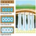 بررسی روش انجماد خاک در آب بندی تونل در مناطق با دبی زیاد