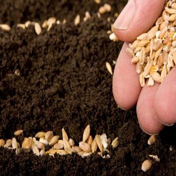 تحقیق کشاورزی تناوبی یا تناوب زراعتی