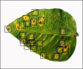 پردازش تصویر شناسایی لکه های قهوه ای روی برگ سویا با متلب