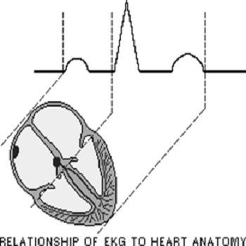 تحقیق روش های موجود در زمینه تحلیل سیگنال قلب