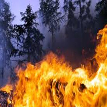 ترجمه یک روش داده کاوی برای پیشبینی آتشسوزی جنگل با استفاده از دادههای هواشناسی