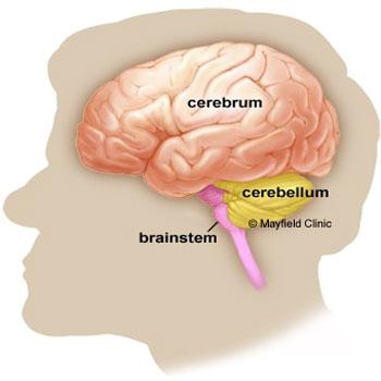 ترجمه شناسایی پتانسیلهای قشر مغز مرتبط با حرکت مبتنی بر روش آموزش مستقل از شخص