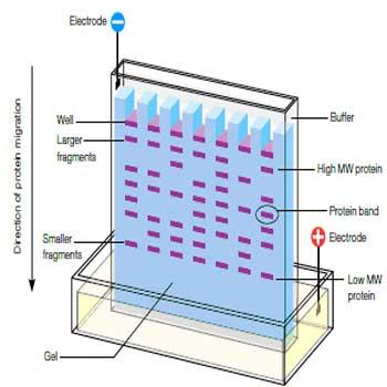 دانلود تحقیق پراکندگی نور الکتروفورز