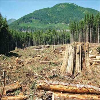 پاورپوینت نابودی و تخریب مراتع و جنگلها