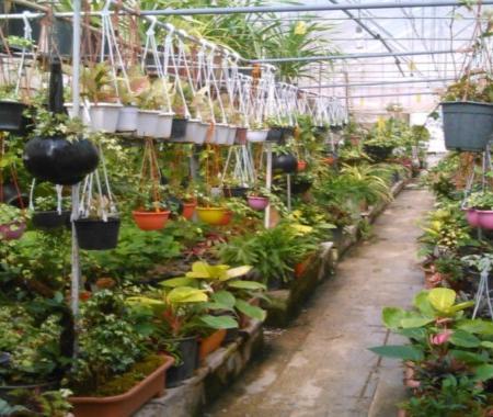 پروژه طراحی سایت فروشگاه گل و گیاه با php