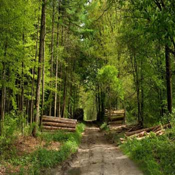 تحقیق بررسی وضعیت جنگلهای ترکیه