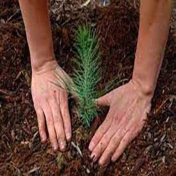 تحقیق حفاظت جنگل ها